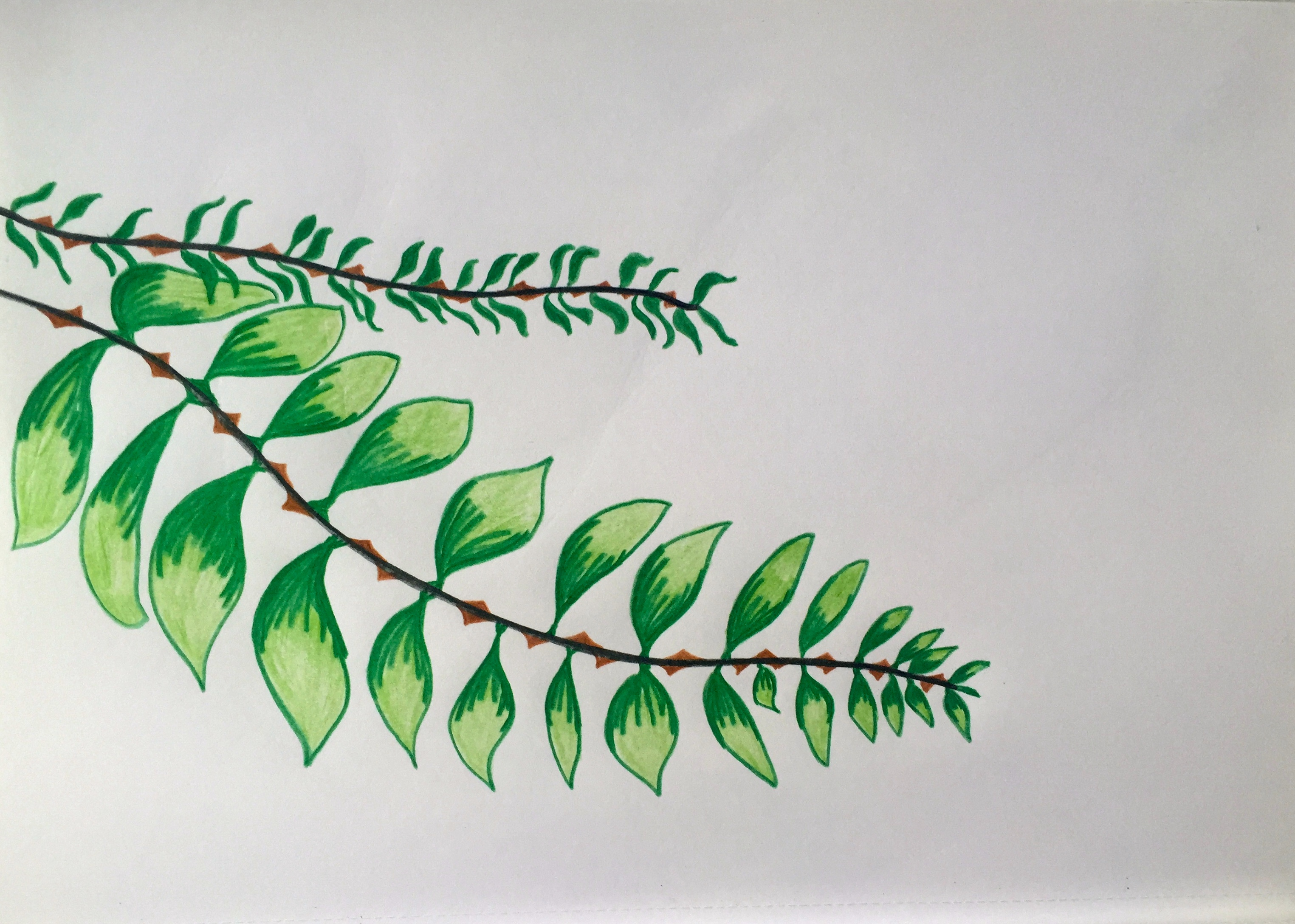 colored pencil drawing leaves a tree artwork artist